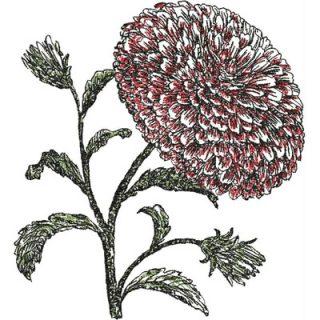 SOGChrysanthemumColored