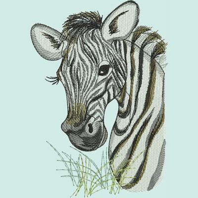 LR_Zebras_ZebraHead400x400
