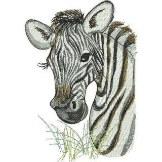 Lr_zebras_zebrahead6x8